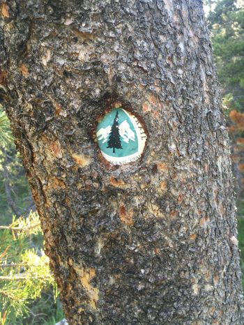 PCT trail marker partially swallowed by tree bark