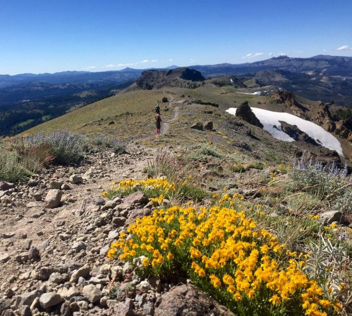 Bright yellow wildflowers in bloom on a high ridge