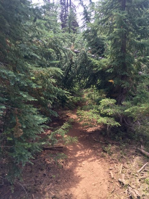 Blowdown trees obstructing the PCT