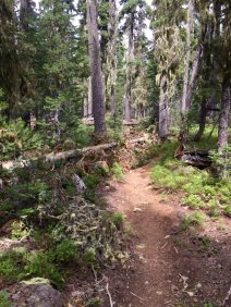 Downed trees blocking the trail