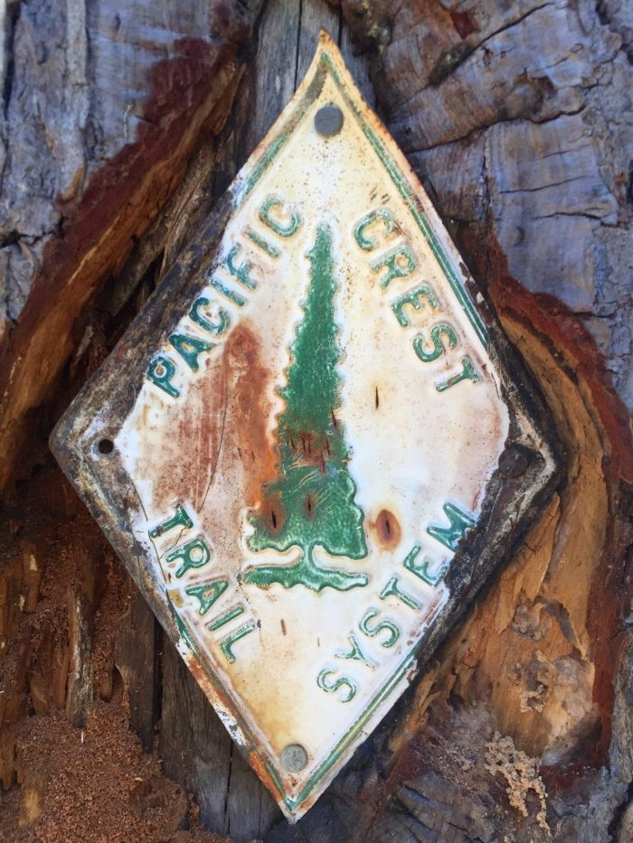 Original PCT marker deep in the bark of a tree