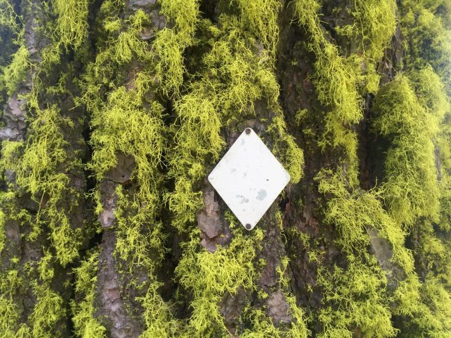 Plain silver diamond trail marker on a tree covered in bright green moss