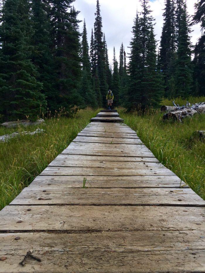 Beardoh approaching a trail boardwalk north of White Pass