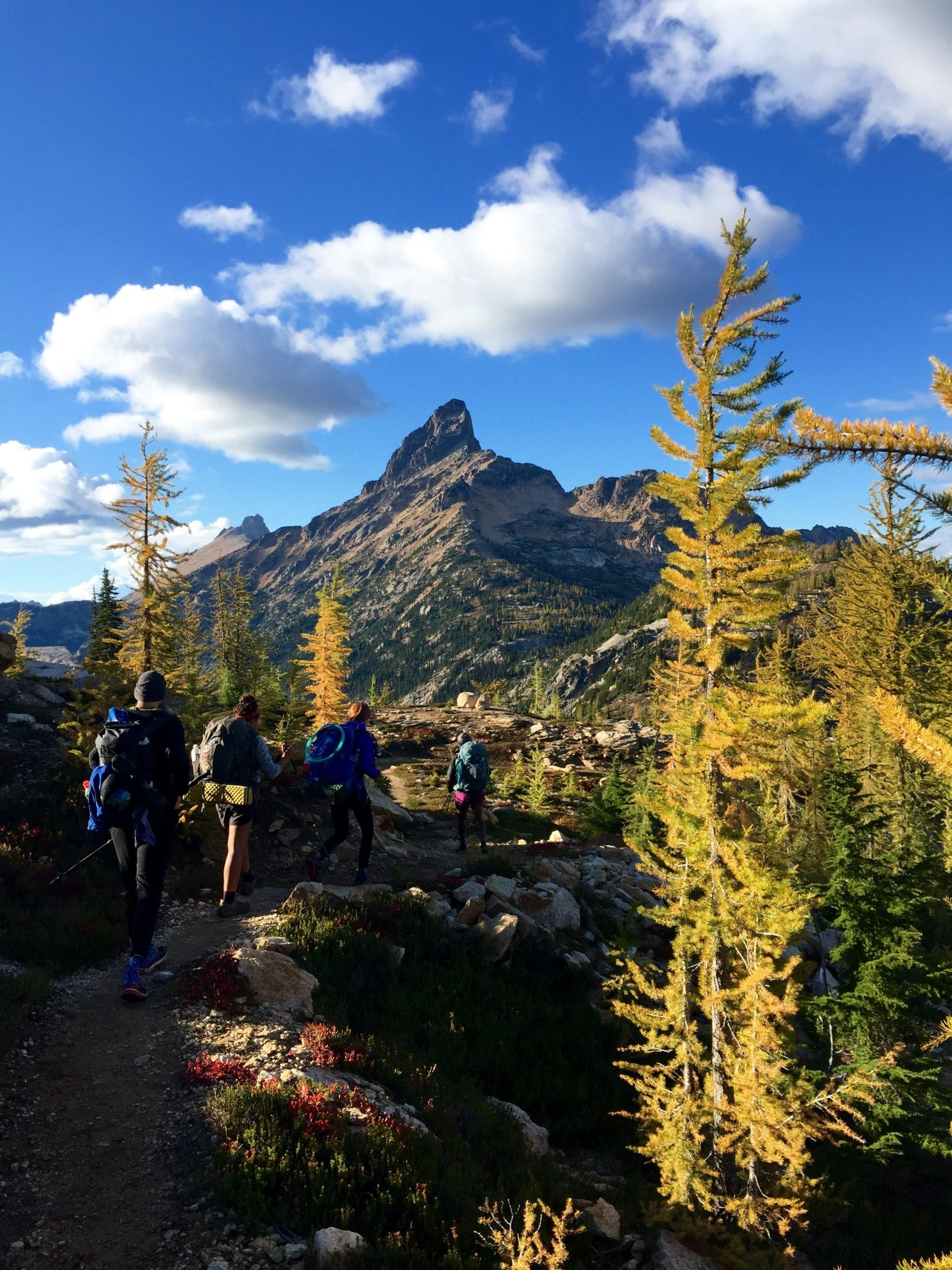 Golden larches along the PCT near Granite Pass