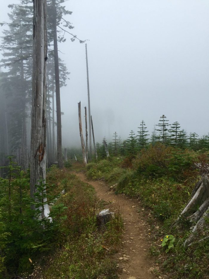 Pacific Crest Trail stretching off into the mist
