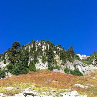 Evergreens fall color and deep blue sky