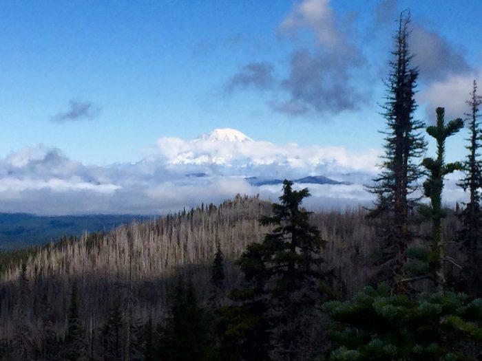 Mount Rainier rising through the clouds