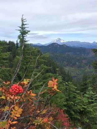 Bright red berries with a view of Glacier Peak