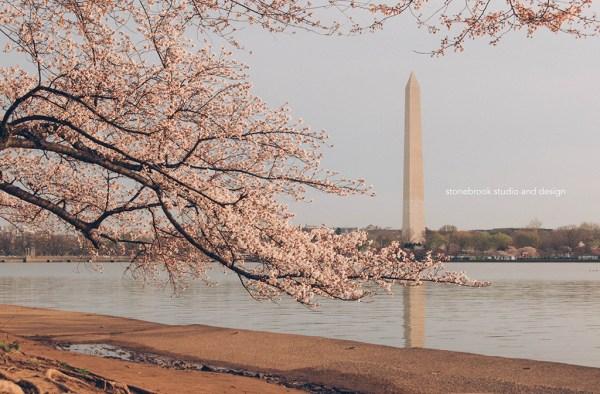 Washington DC, Washington Cherry Blossoms, Massachusetts Photographer, Sturbridge Photographer, Fine Art Photography, Cherry Blossoms Photography, DC Photography, Washington DC