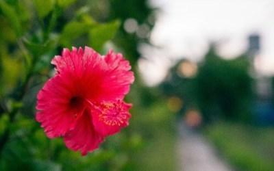 Intro to Hibiscus
