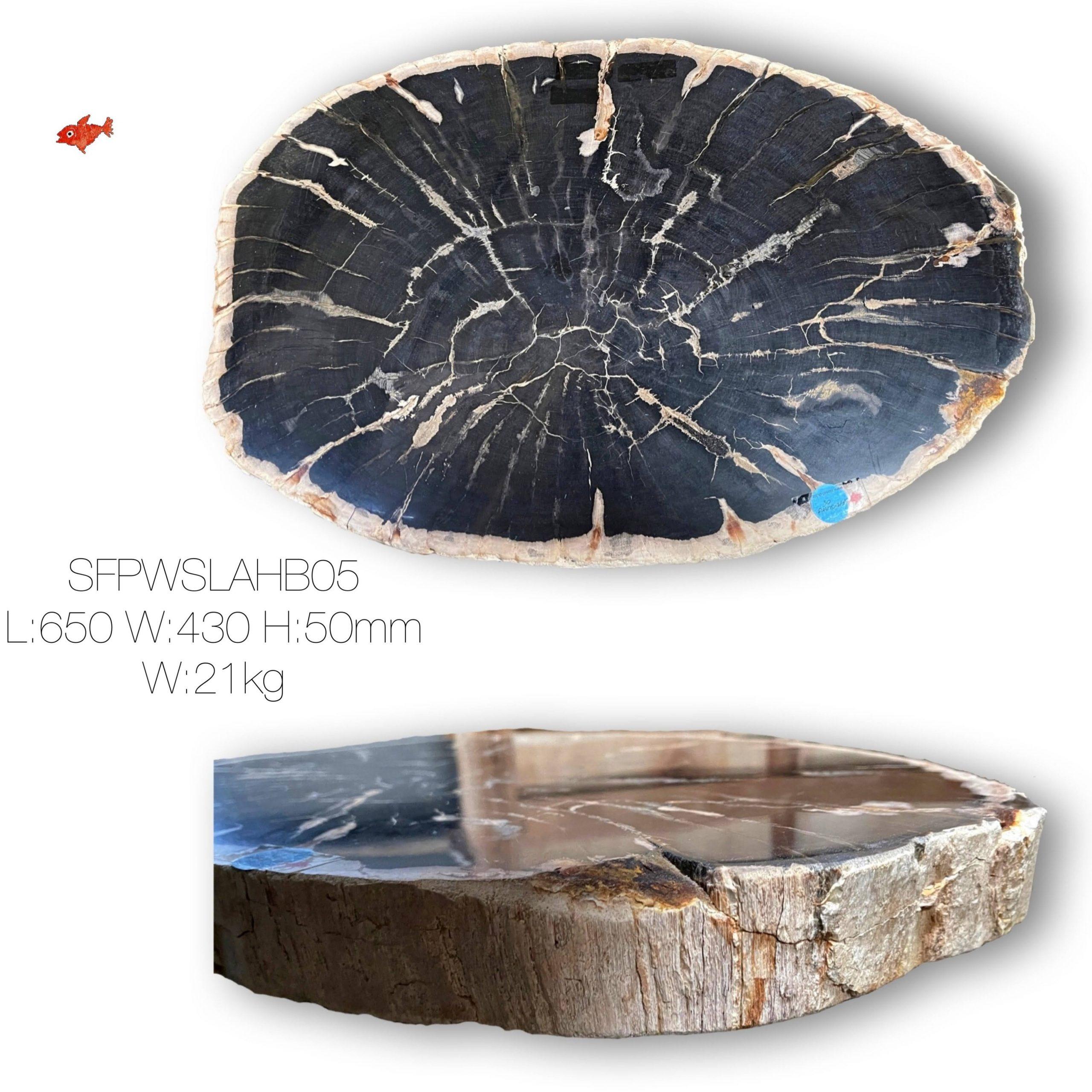 Large Petrified Wood Slab