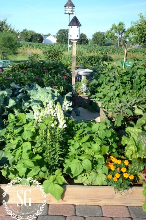 JULY IN THE VEGETABLE GARDEN-raised bed gardens-stonegableblog.com