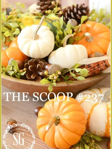 THE SCOOP #237