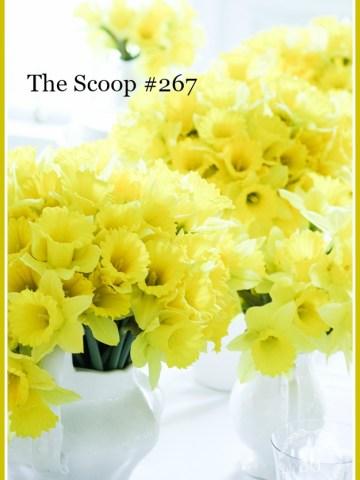 THE SCOOP #267