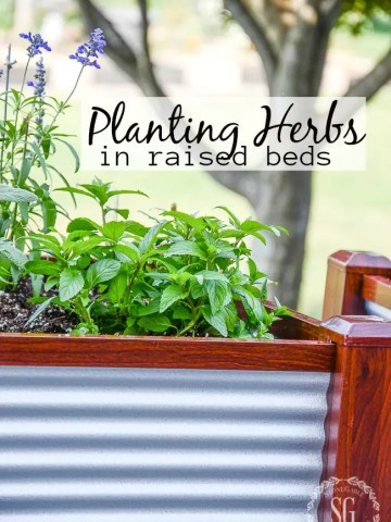 PLANTING HERBS IN RAISED BEDS