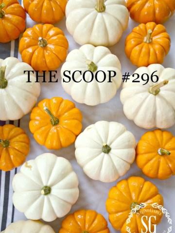 THE SCOOP #296
