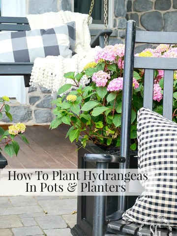 HOW TO PLANT HYDRANGEAS IN POTS AND PLANTERS