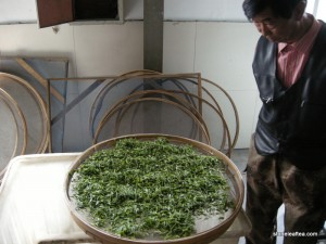 ChinaSpring2015-OrganicGreenTeaFactoryWithering