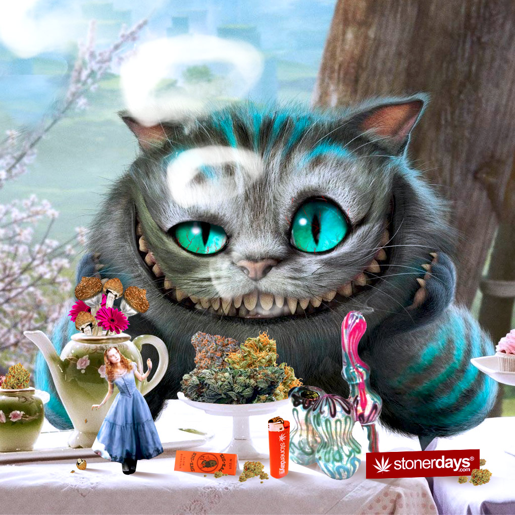 Alice In Wonderland Wallpaper Quotes Cheshire Cat Mobile Wallpaper For Stoners Stoner Pictures Stoner Blog