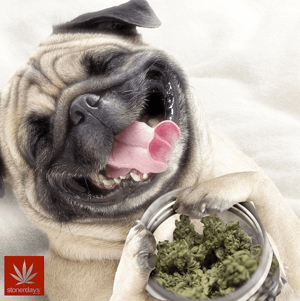 Coffee Hd Wallpaper Iphone Mobile Wallpaper For Stoners Stoner Pictures Stoner Blog