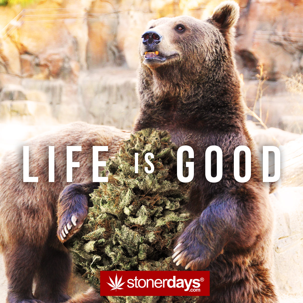 Iphone 6 Holiday Wallpaper Mobile Wallpaper For Stoners Stoner Pictures Stoner Blog