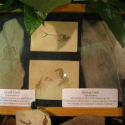 Fossil Display 007