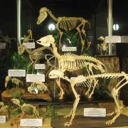Mammals and Birds 002