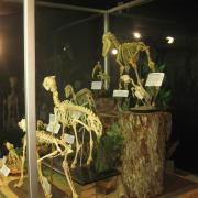 Mammals and Birds 005