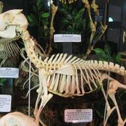 Mammals and Birds 011