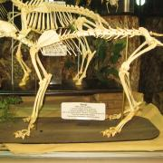 Mammals and Birds 012