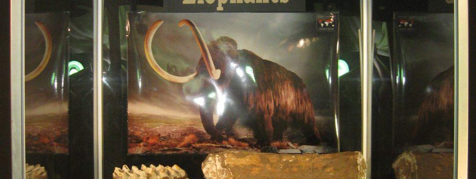 Texas Elephants