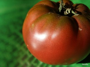 Black Russian tomato, organic heirloom plant for sale, nz