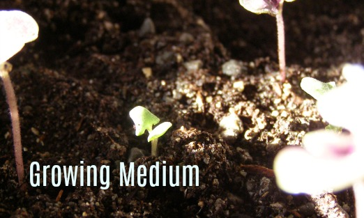 growing medium, stoney ground herb practises