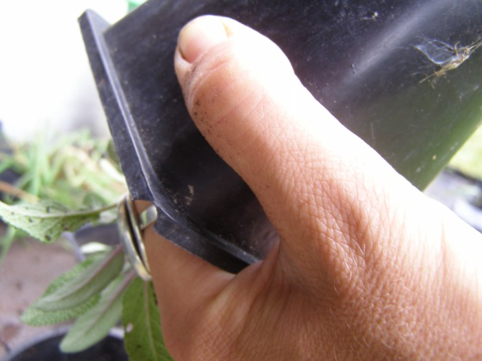How to re pot your plant