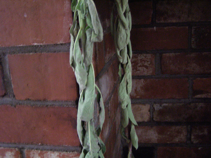 Drying white sage