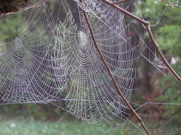 cobwebs on a misty morning