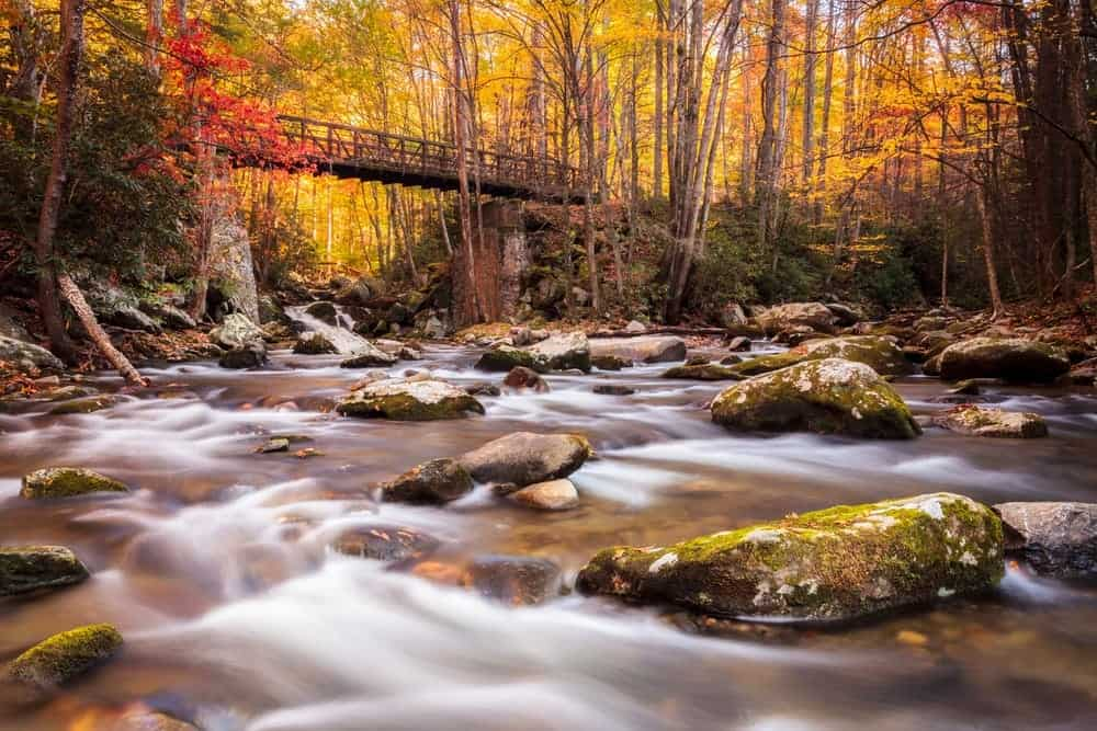 5 Reasons Taking a Smoky Mountain Vacation Will Make You