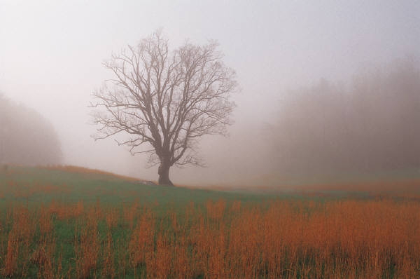 MS autumn fog