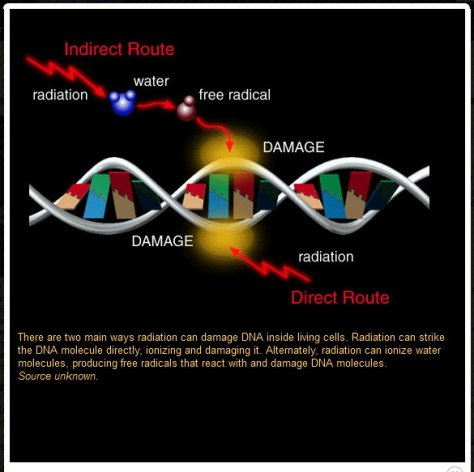 Free Radical damages DNA
