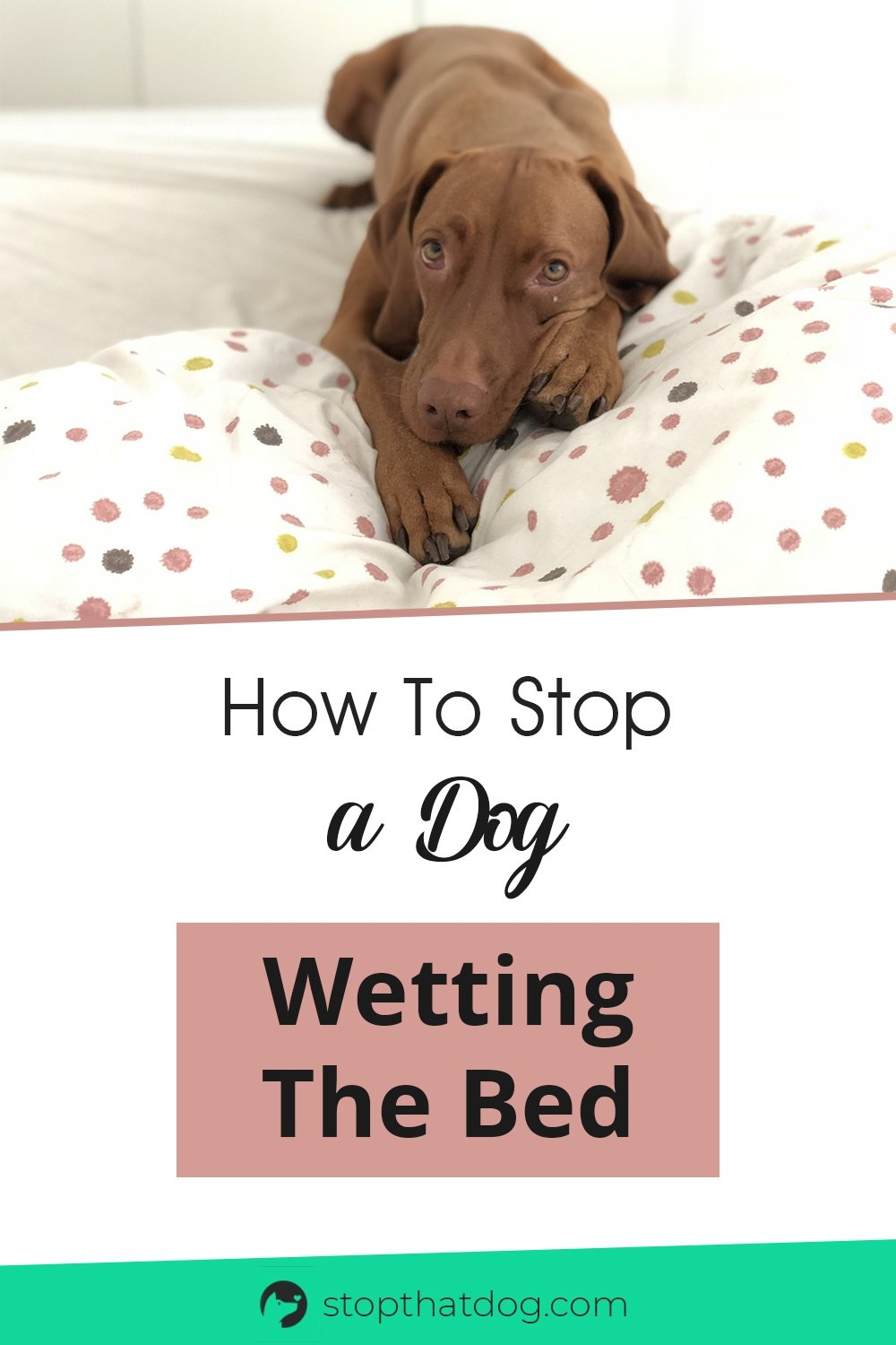 Is your dog wetting their bed (or peeing in yours?) If so, this guide explores some of the common triggers and shows you how to fix the problem.