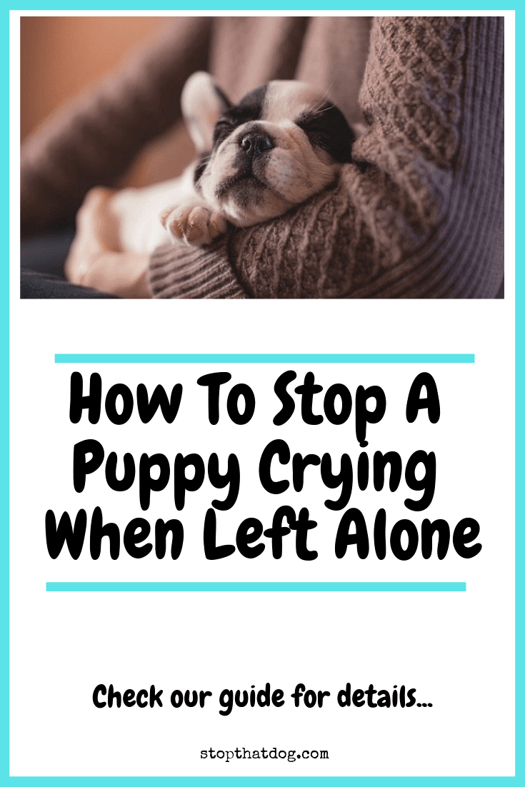 Is your puppy crying when left alone at home? Our guide explains the most likely causes and shows you how to keep your puppy calm and happy.