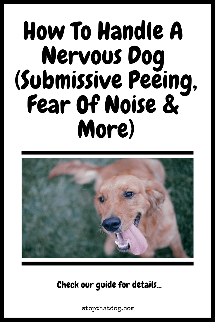 Looking for some advice on handling a nervous dog? If so, our guide shows you how to solve submissive and fearful peeing, fear of noise, storms, and more.