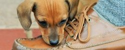 How To Stop Your Dog Chewing Shoes 25