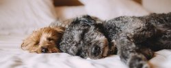 What's The Best Orthopedic Memory Foam Dog Bed? Our Complete Guide 29