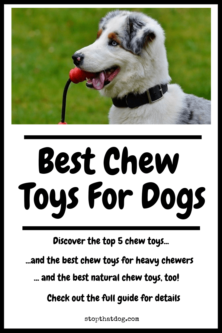 Looking for the best dog chew toys? Our in-depth guide reveals the top 5 options, along with the best toys for heavy chewers, and the top natural dog chews.