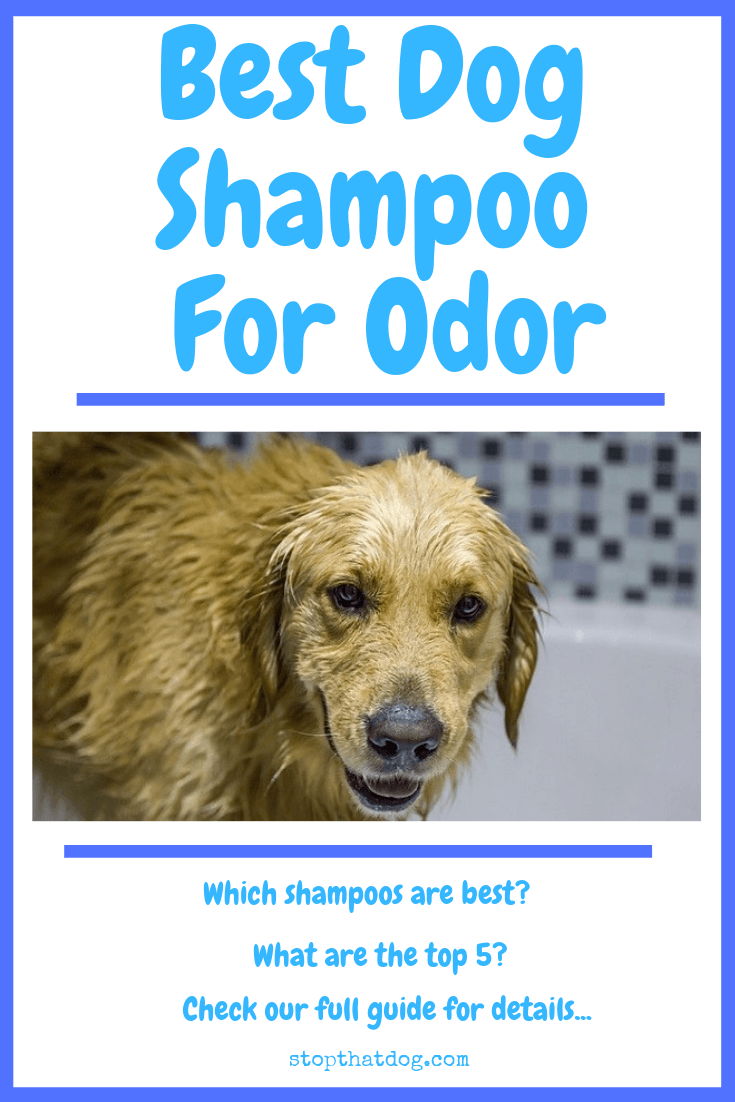 Looking for the best dog shampoo for odor? If so, our guide reveals the top options for removing pet smells without any worry!