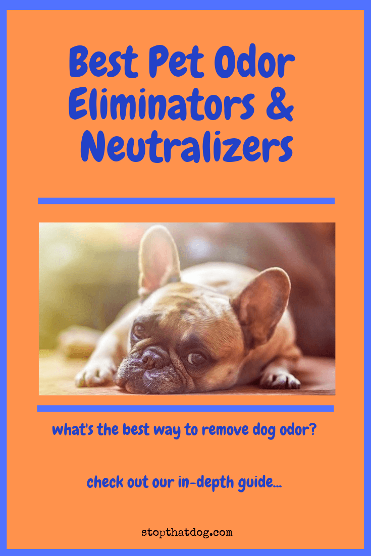 Want to remove pet odor? Our guide reveals the top pet odor eliminators and neutralizers currently on the market. Have a lovely, fresh-smelling home again!