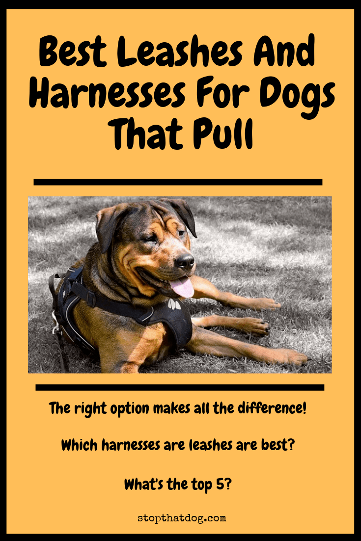 Looking to buy the best leash or harness for a dog that pulls? If so, our guide reveals the top options on the market right now.
