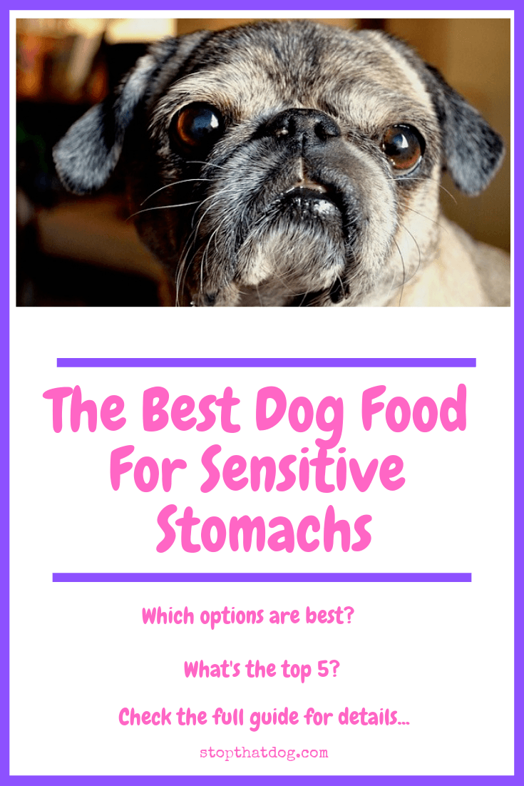The Best Dog Food For Sensitive Stomachs Stop That Dog