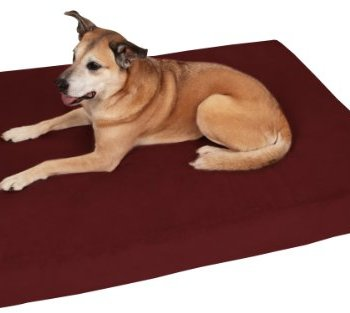 What's The Best Orthopedic Memory Foam Dog Bed? Our Complete Guide 1